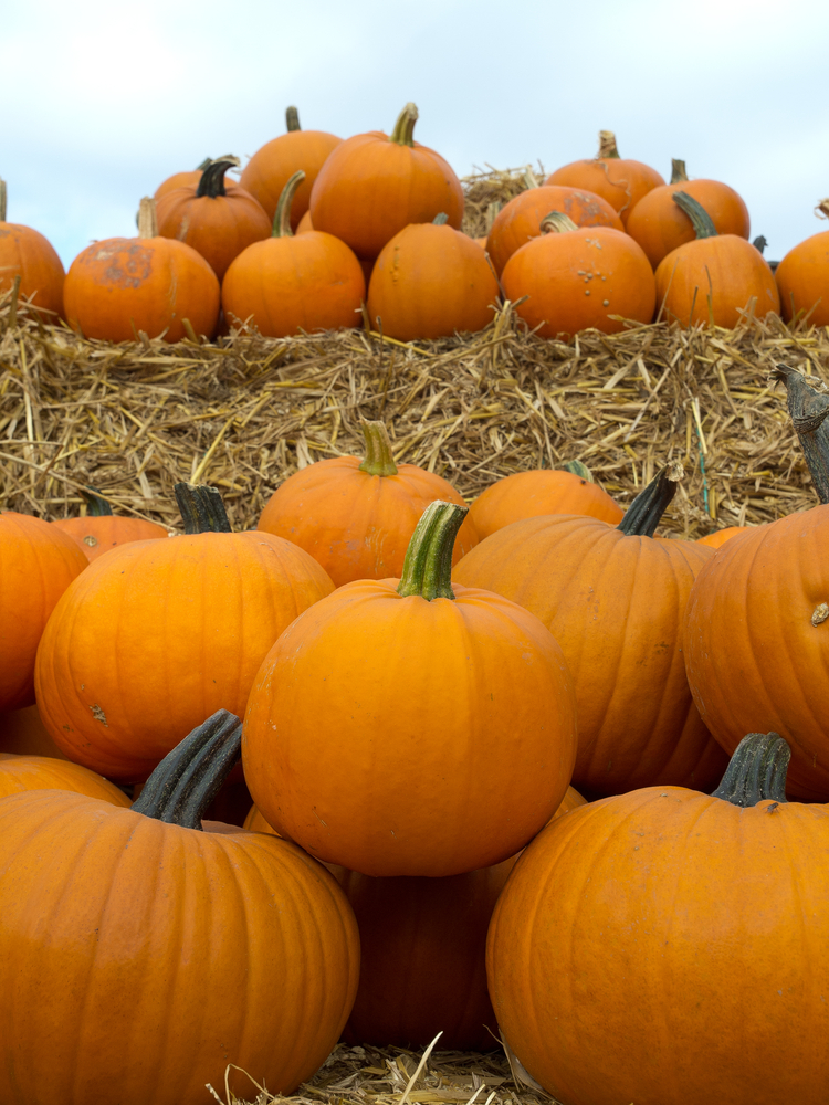 a patch of pumpkins in front of hay
